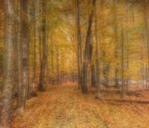 Must Love Autumn