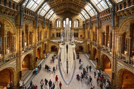 Blue Whale Skeleton