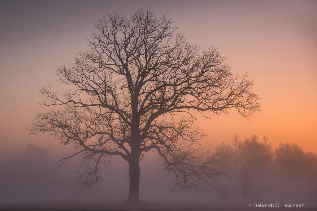 Great Swamp Dawn
