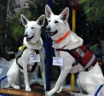 Rescue dogs  California  ski resorts