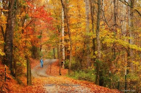 Strolling Through Autumn