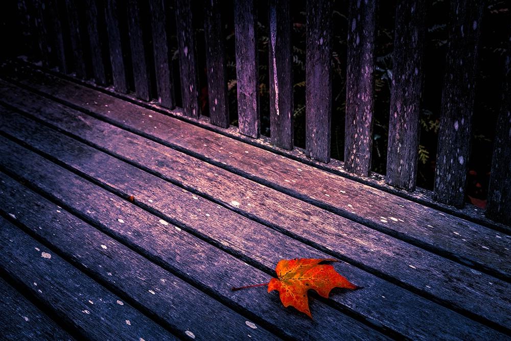 Autumn's Finale - ID: 15494565 © Jeff Robinson