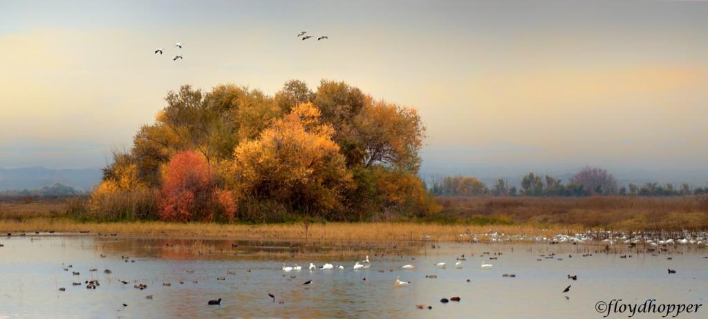 Autumn on the Marsh
