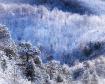 April Snow in Fou...
