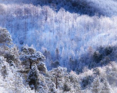 April Snow in Fourmile Canyon