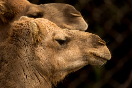 Profiles in Camel