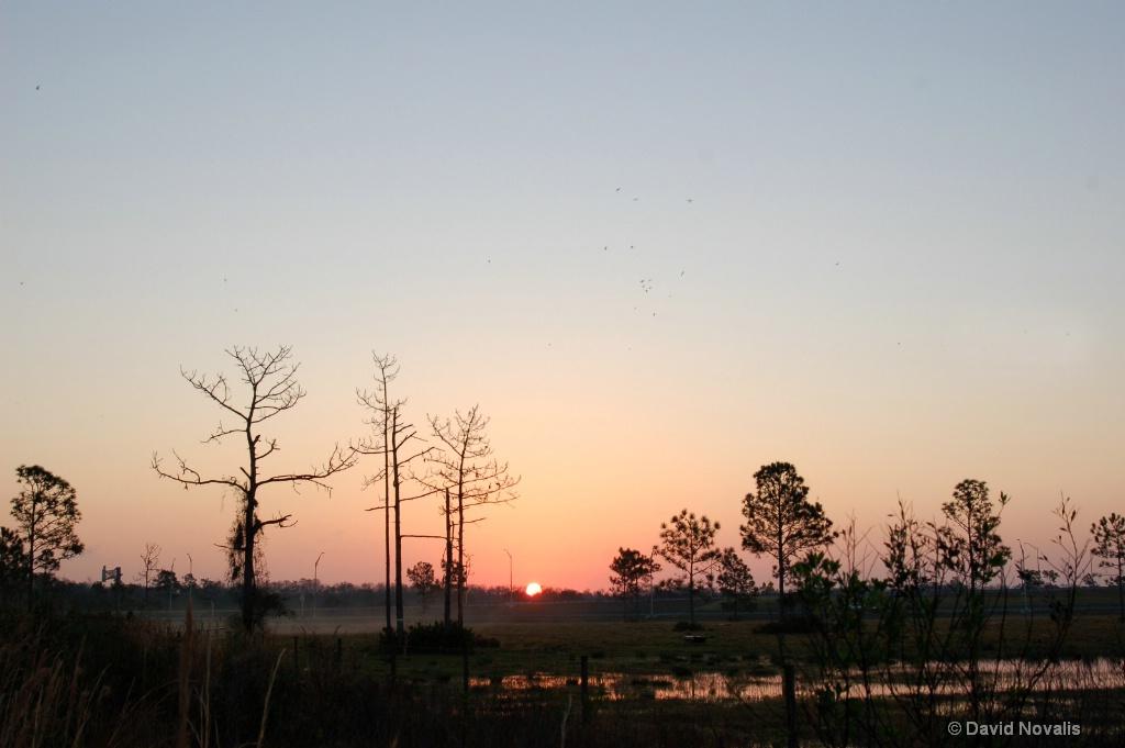 Nona Wetlands