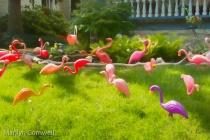 Flamingo Fun on the Buffalo Garden Walk 2017