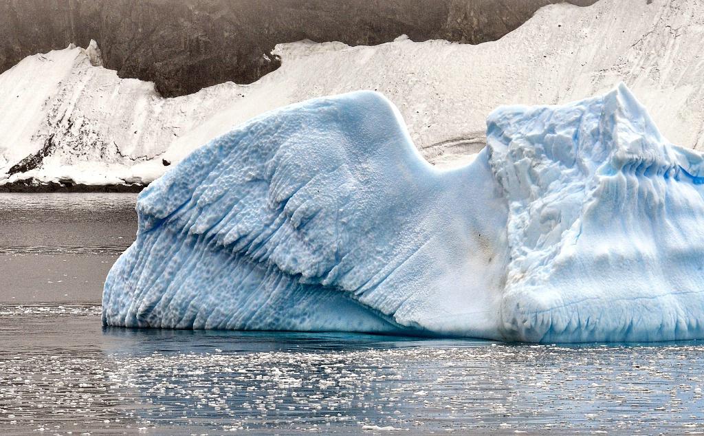 Ice Wing