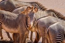 Lovely Stripes 7589
