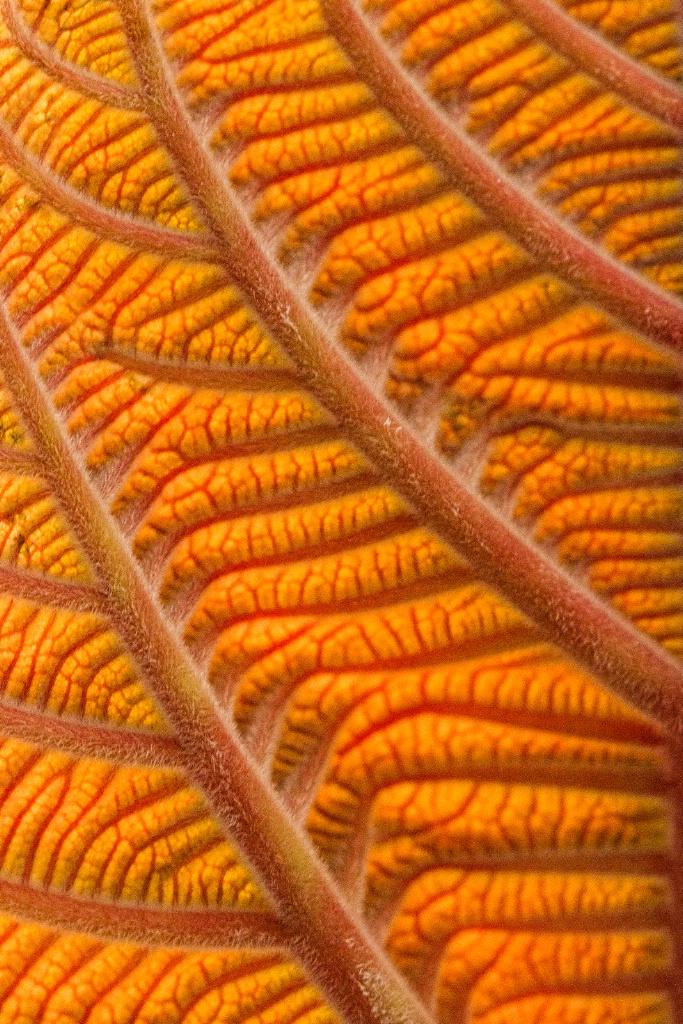 Copperleaf - ID: 15501626 © Marilyn Cornwell