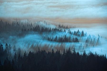 Twilight Mists