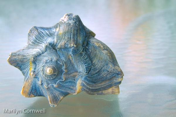 Genesis - ID: 15505259 © Marilyn Cornwell