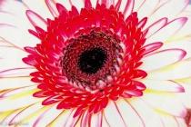 Flower in an O