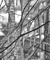 Icicles Abstract