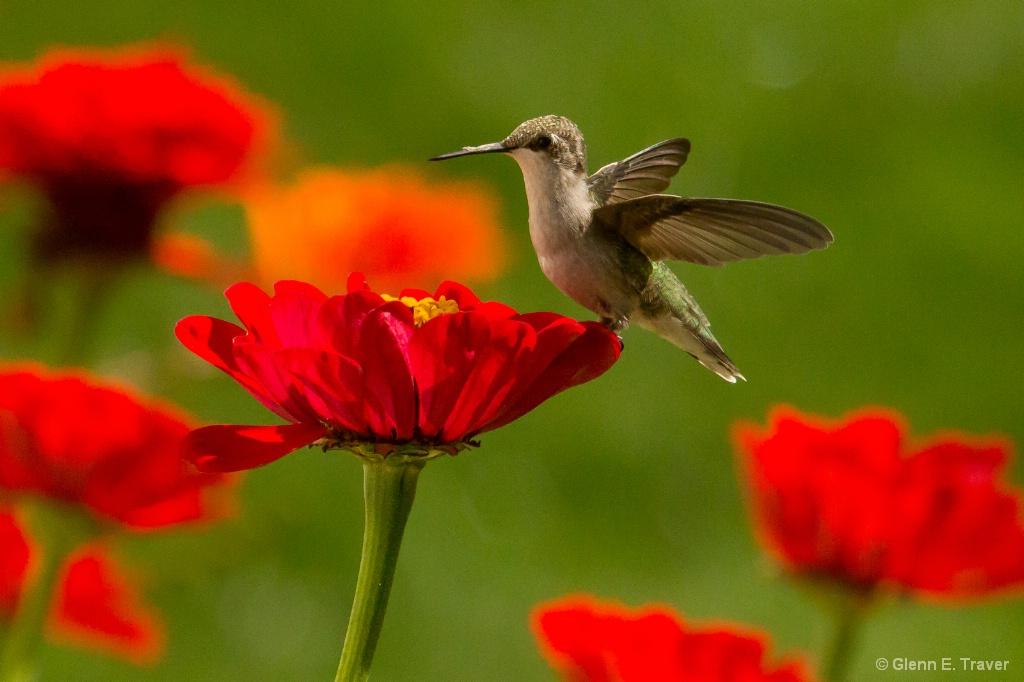 Tea Cup for Hummingbirds