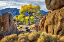 Photography Contest Grand Prize Winner - January 2018: Alabama Hills Cottonwood No. 3