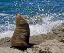 Smell that fresh sea air
