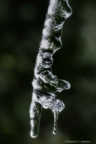 Interesting Icicle