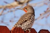 Flicker Closeup