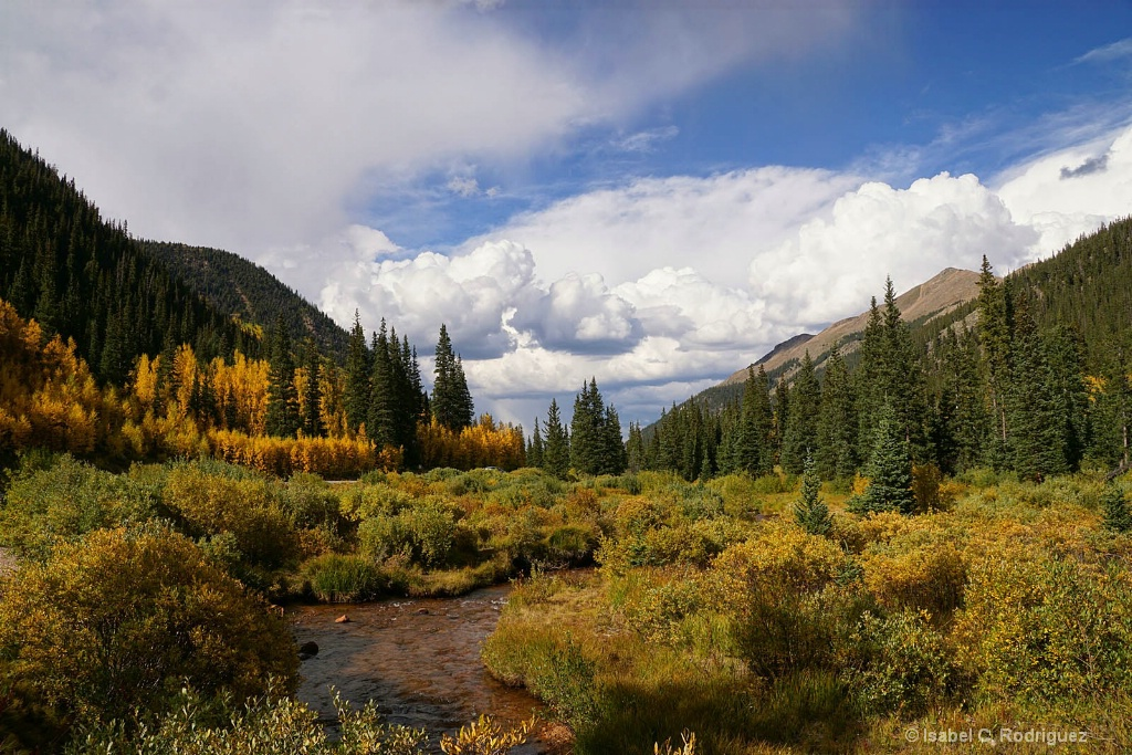 Guanella Fall Forest