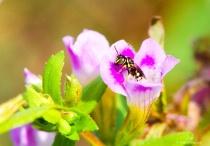 the nectar collector