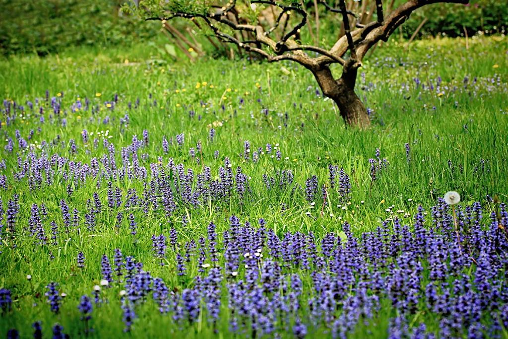 Blue Field