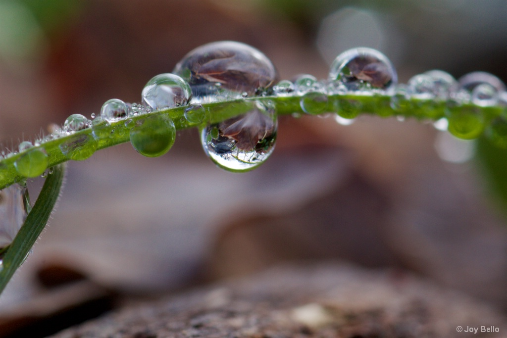 Water drop reflections
