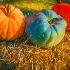 © Paula Xavier PhotoID# 15513068: Fall-Colors