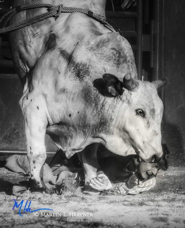 A Kiss is Just a Kiss - J Bar W Ranch Rodeo - ID: 15513638 © Martin L. Heavner