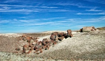 Exploring the Petrified Forest