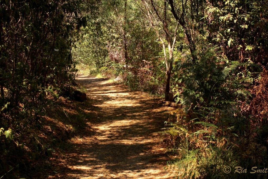 Hot Bush Track