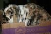 Box of Bunny