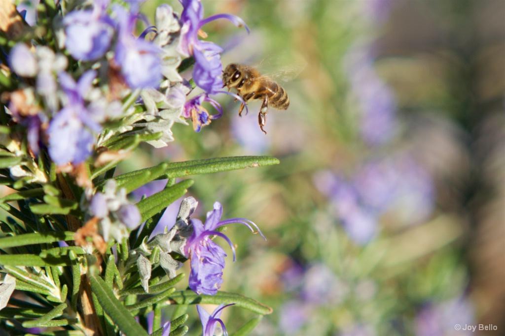 Beneficial Honeybee