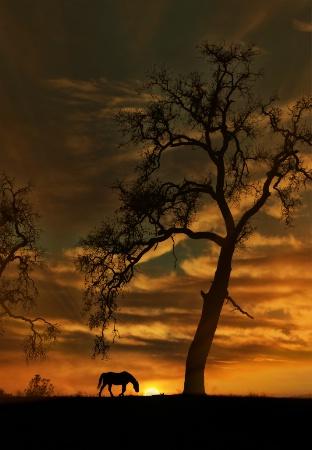 Creston Sunrise