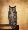 Owl at the Pow Wo...