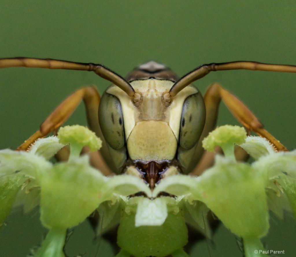 A Strange Bug - ID: 15518937 © paul parent