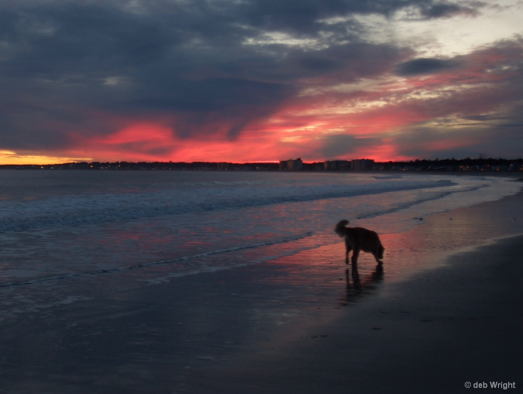 Sunset with dog - ID: 15519351 © deb Wright