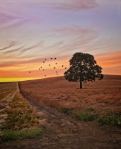 Grass Seed Field Sunset