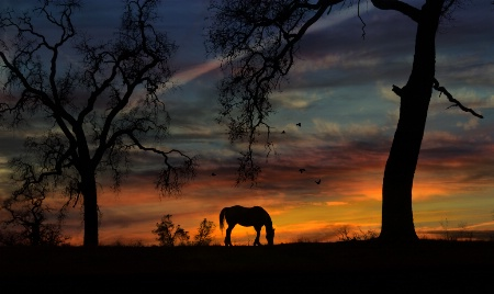 Horse and Oaks
