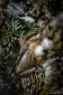 Snowy visitor