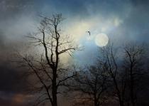Eagle Canopy