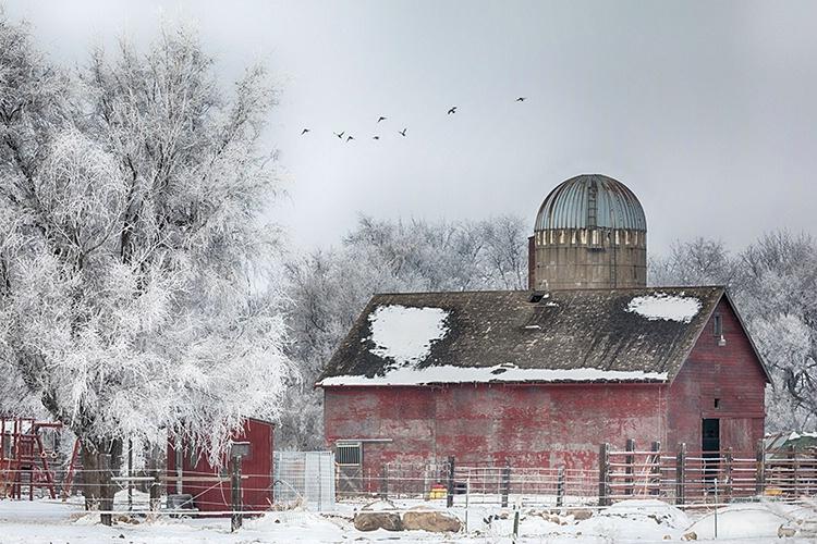 P3A8800c Winter 2018 - ID: 15521534 © Raymond E. Reiffenberger