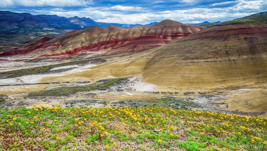 Wildflowers of the Painted Hills