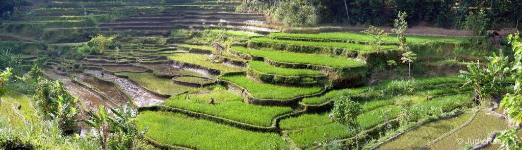 Rice Terraces - ID: 15522015 © Judy Rae