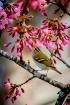 cherry & bird