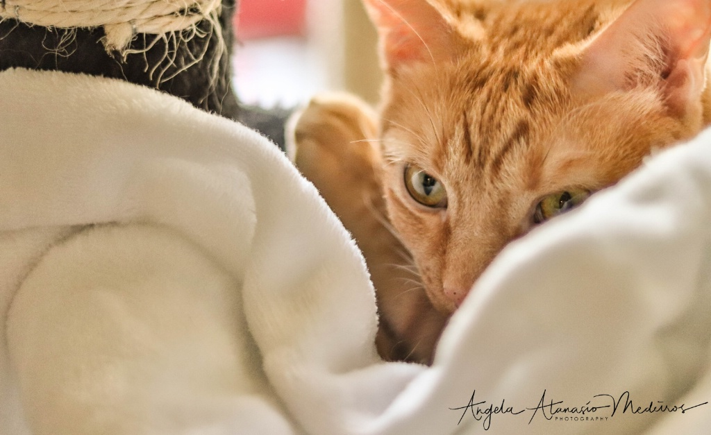 Peek-a-boo! Kitty!