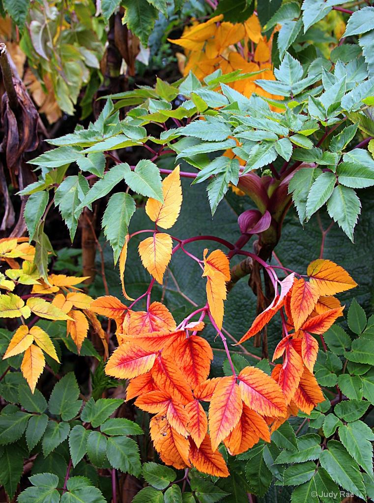 Veriegated Leaves - ID: 15530243 © Judy Rae