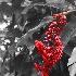 © Judy Rae PhotoID# 15530252: Ginger Blossom Flower