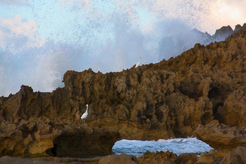 Waves Among the Rocks